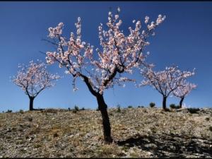 Oria-Spain